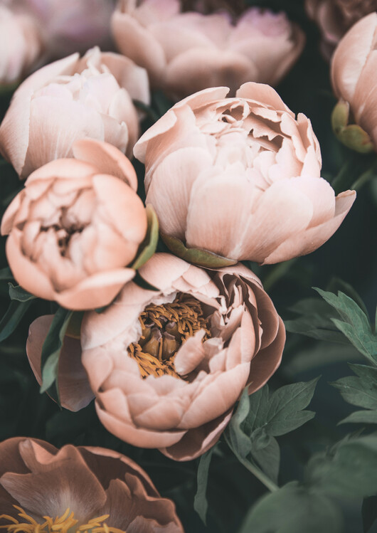 Ταπετσαρία τοιχογραφία Bouquet