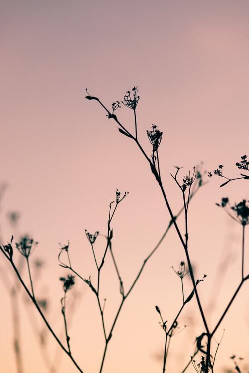 Ταπετσαρία τοιχογραφία Dried plants on a pink sunset
