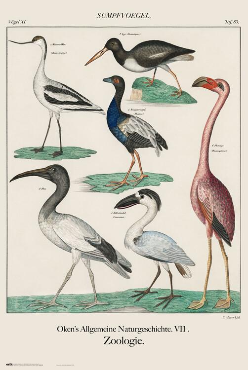 Плакат Vintage Birds