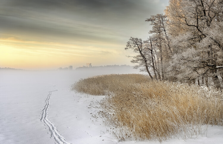 Платно Misty winter morning