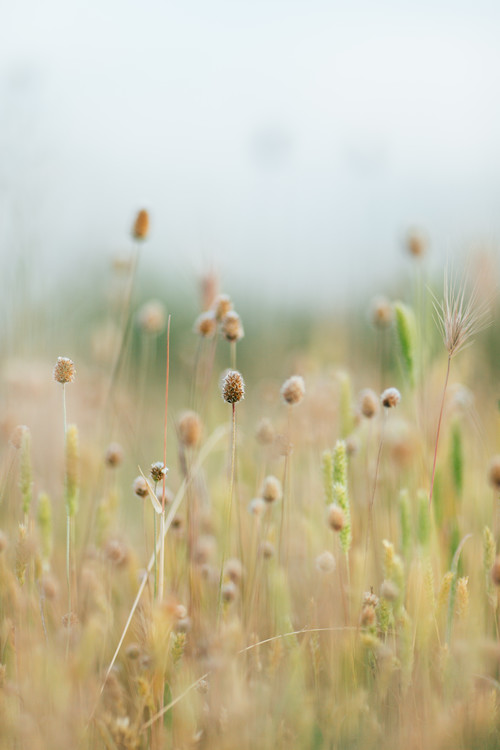 Pastel colour plants фототапет