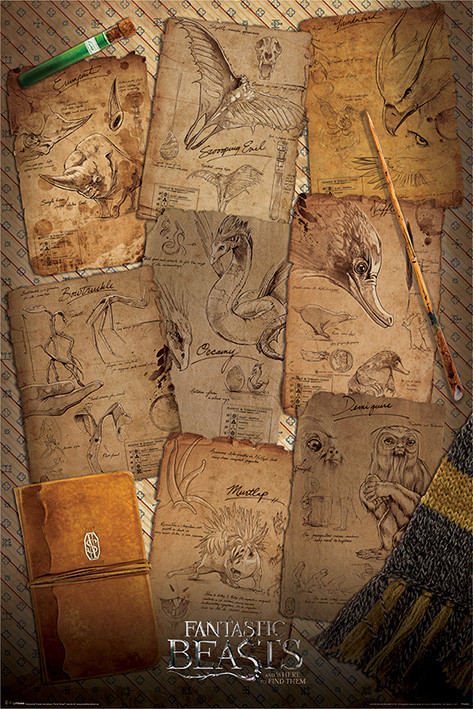 Fantastic Beasts And Where To Find Them - Notebook Pages - плакат