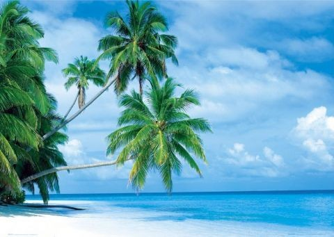Maledives - fihalhohi island - плакат