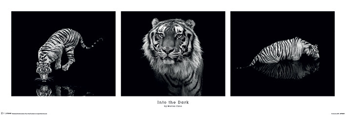 into the dark Sequel to the cosmopolitan & wattpad featured a dark fall five weeks after the events that fateful sunday afternoon jake is left dealing with the consequen.