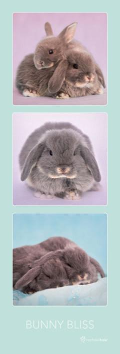 Rachael Hale - bunny bliss плакат