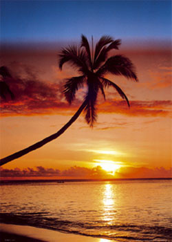 Sunset & palm tree плакат