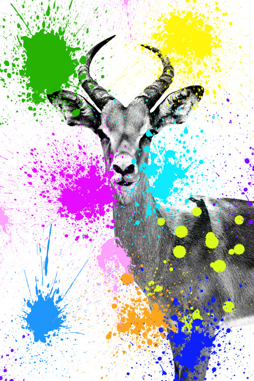 художествена фотография Antelope Reedbuck