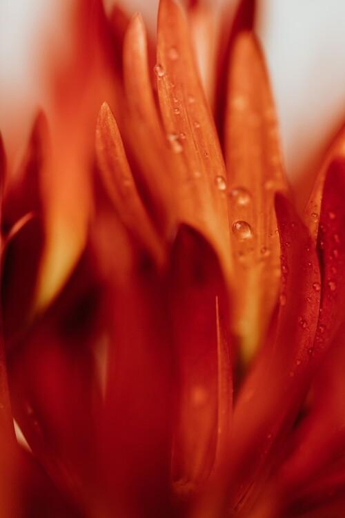 художествена фотография Beautiful detail of red flowers