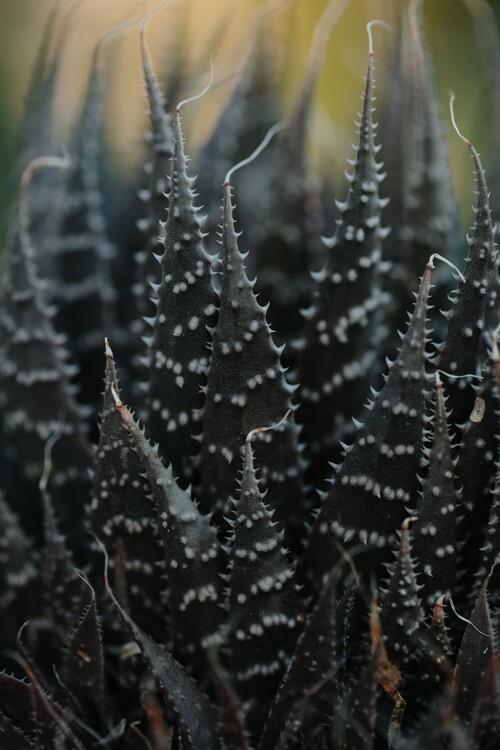 художествена фотография Cactus leaves