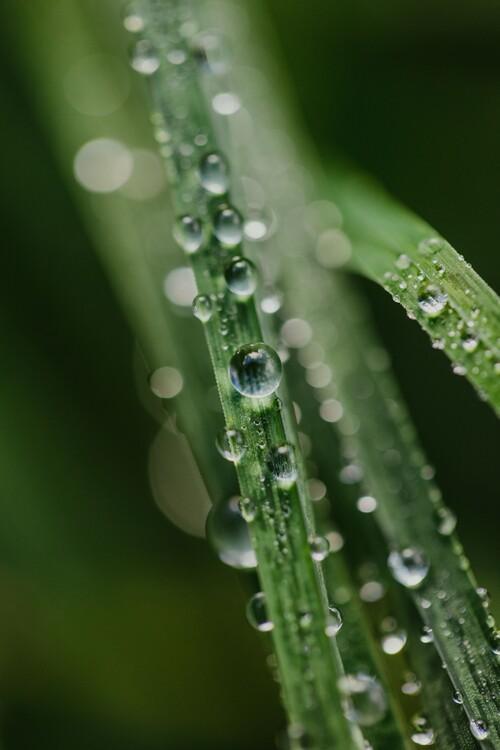 художествена фотография Drops on plants