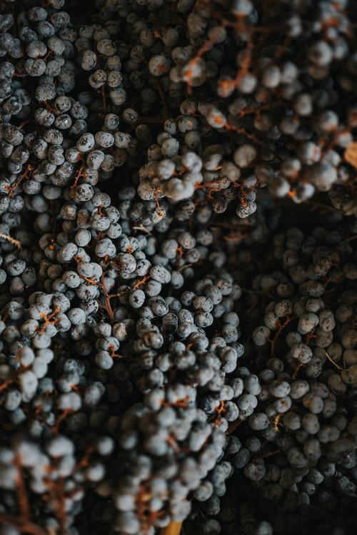 художествена фотография Dry fruits from nature