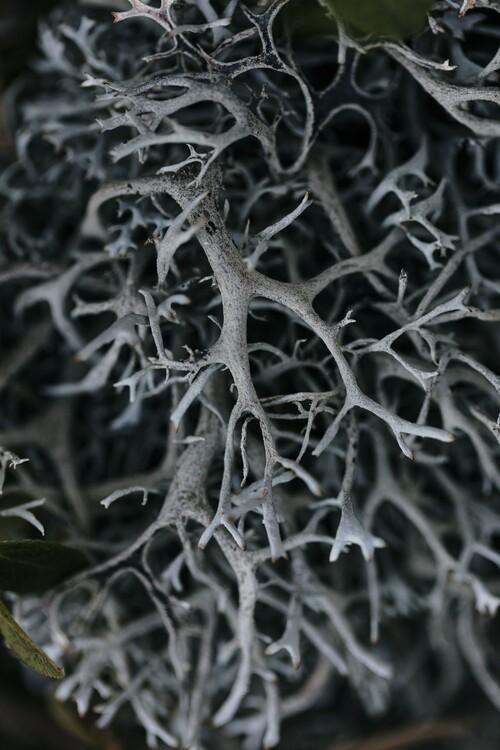 художествена фотография Dry plants from the forest