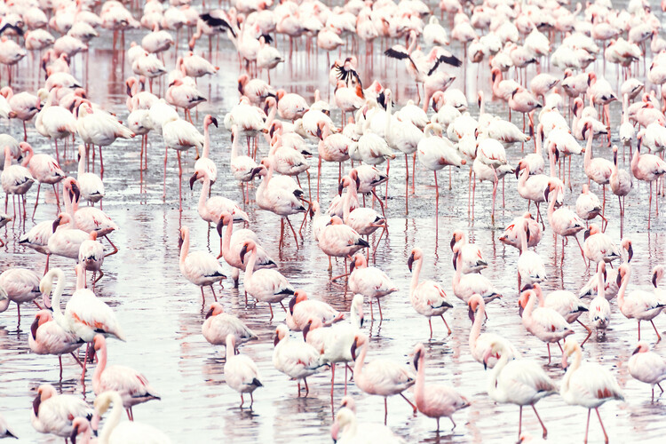 художествена фотография Flock of flamingos