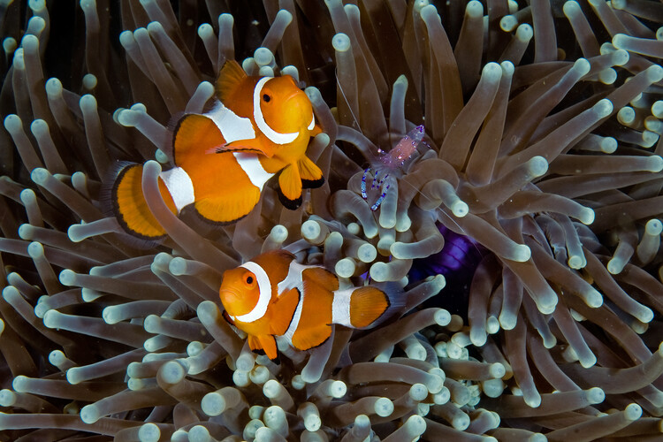 художествена фотография Fun at the Anemone