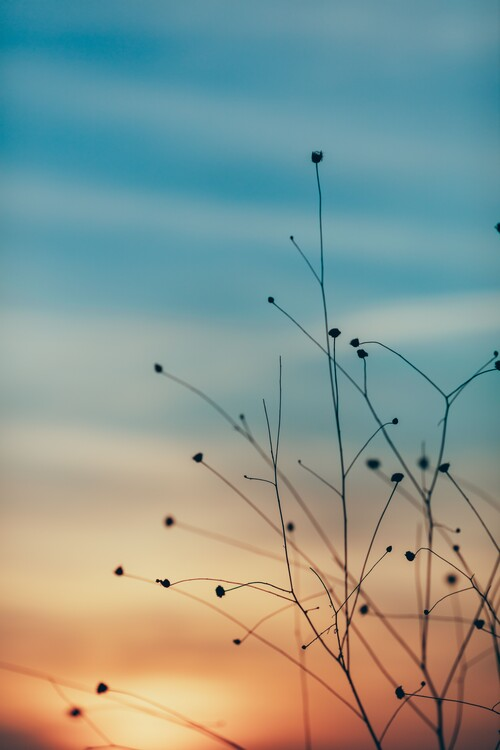 художествена фотография Golden hour