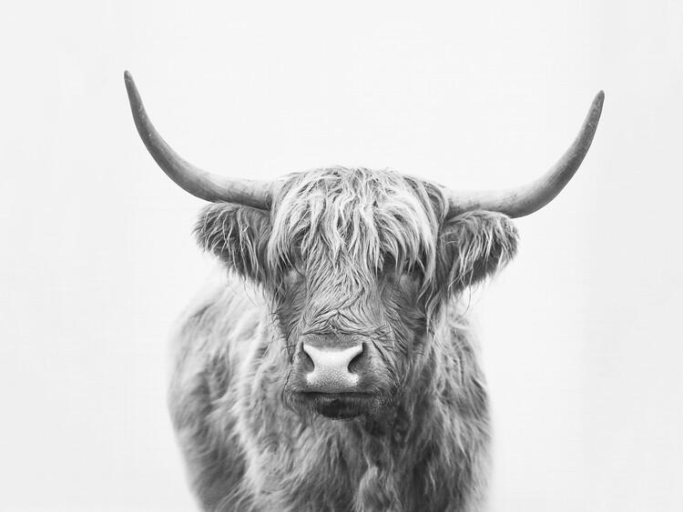 художествена фотография Highland bull