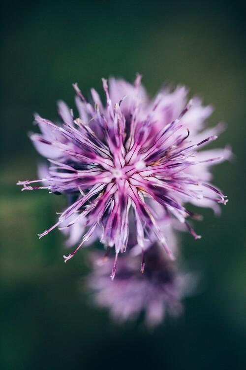 художествена фотография Macro of lilac flower