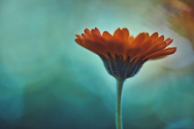 художествена фотография Orange flowers at dusk