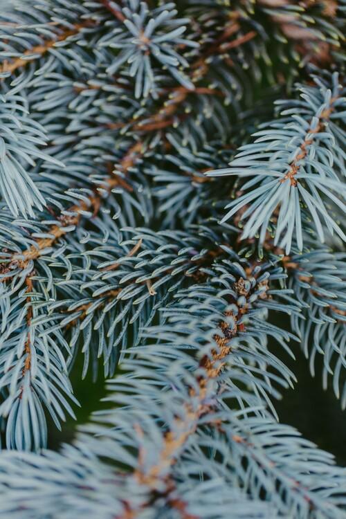 художествена фотография Tree branches detail