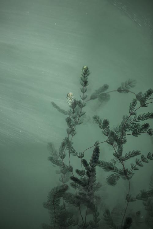 художествена фотография Underwater plants