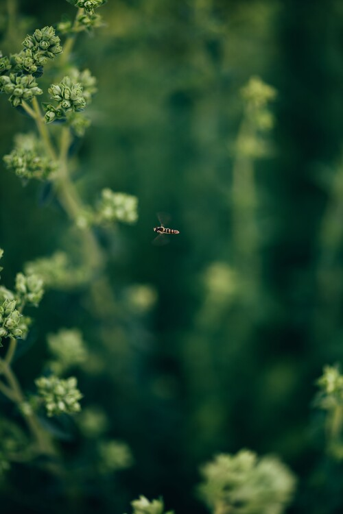 художествена фотография Wasp- on the plants