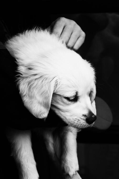 художествена фотография Black and White Puppy