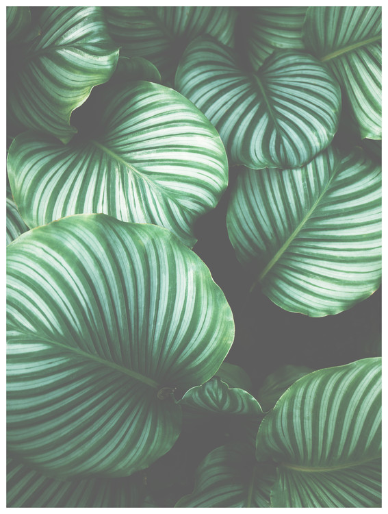 художествена фотография Border green leaves