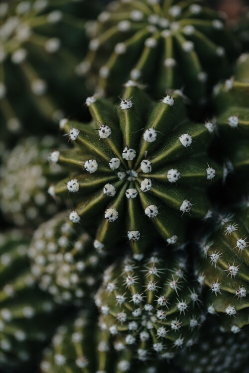 художествена фотография Cactus from above