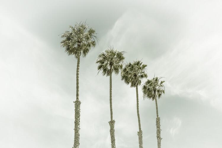 художествена фотография California Vintage Palm Trees