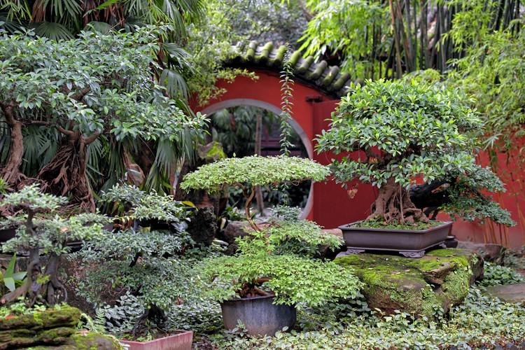 художествена фотография China 10MKm2 Collection - Bonsai Trees