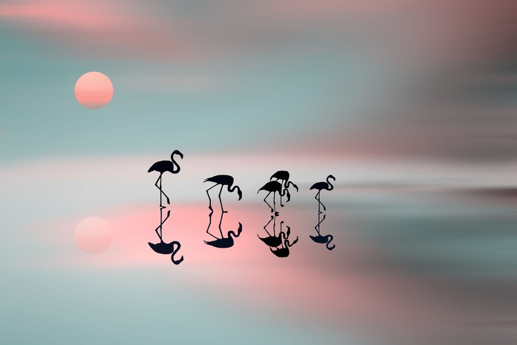 художествена фотография Family flamingos