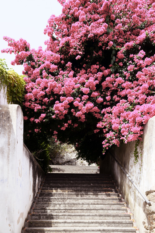 художествена фотография Flowery Staircase
