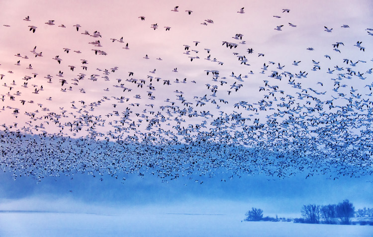 художествена фотография Flying In the Fogging Morning