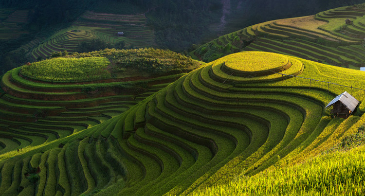 художествена фотография Gold Rice Terrace In Mu Cang Chai,Vietnam