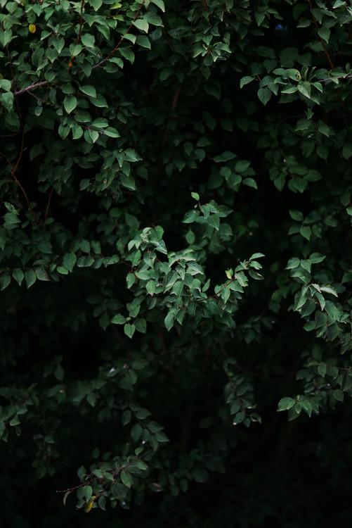 художествена фотография Green leafs