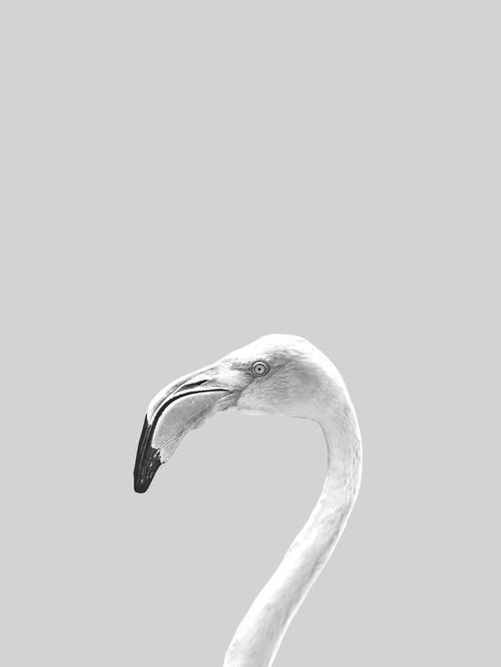 художествена фотография Grey bird
