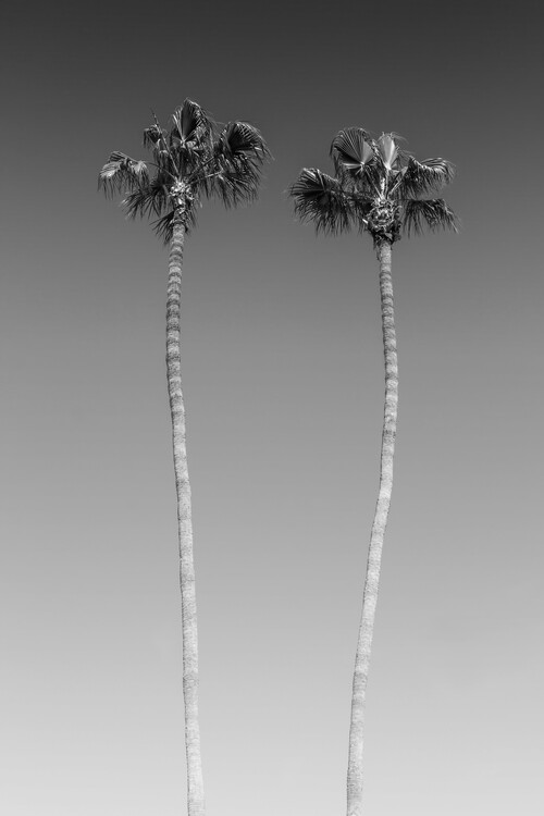 художествена фотография Palm Trees In Black & White