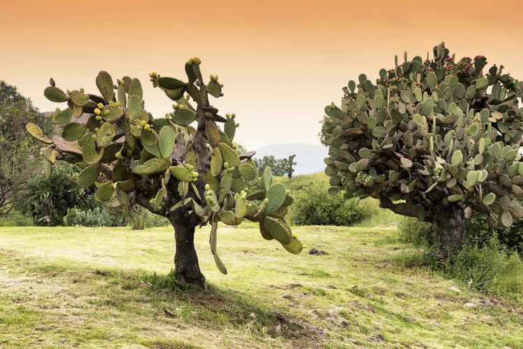 художествена фотография Prickly Pear Cactus