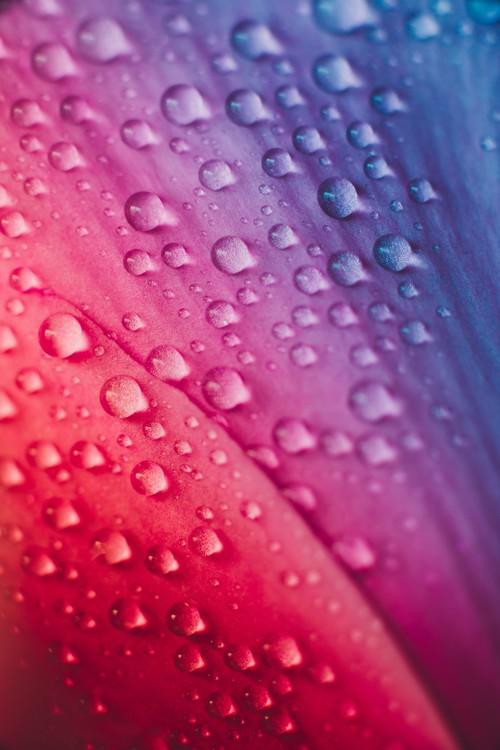 художествена фотография Raindrops over the plants