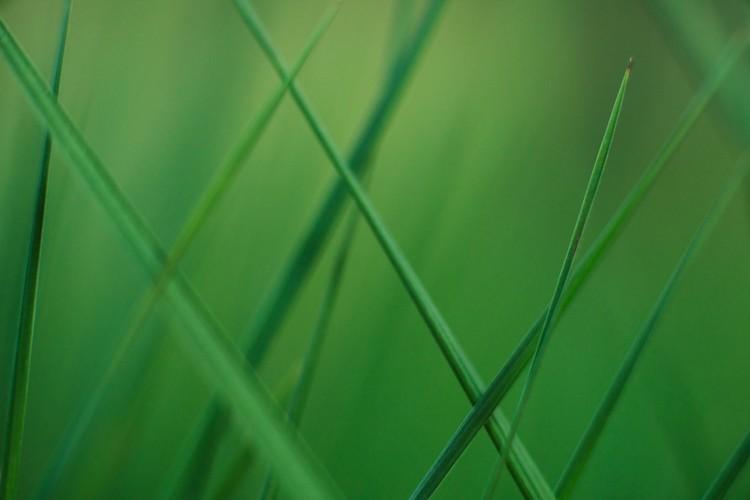 художествена фотография Random grass blades