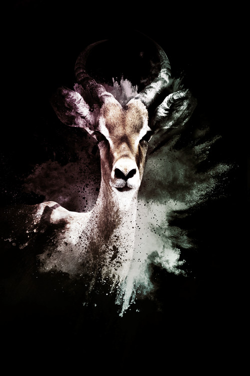 художествена фотография The Antelope