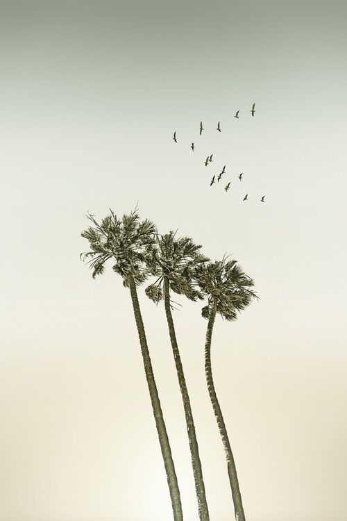художествена фотография Vintage palm trees at sunset