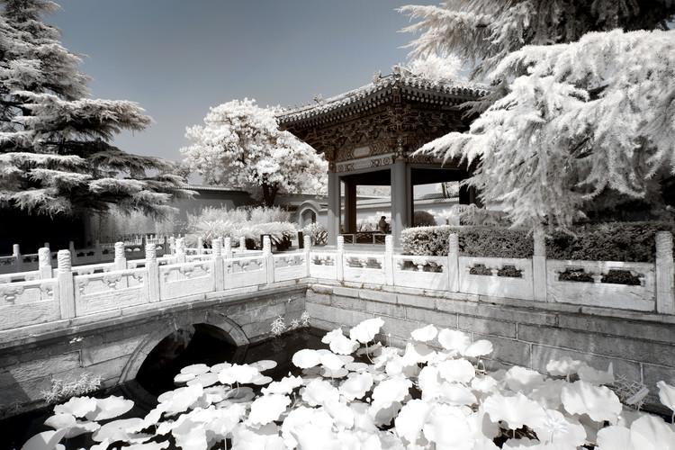 художествена фотография White Lotus Temple
