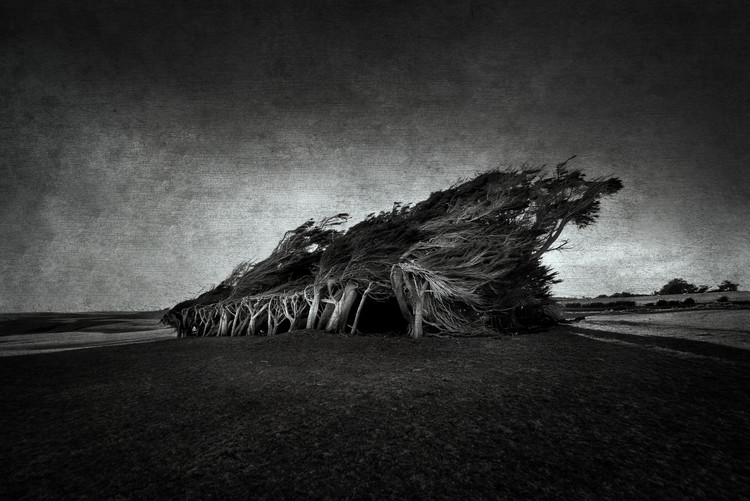 художествена фотография Wind Blown