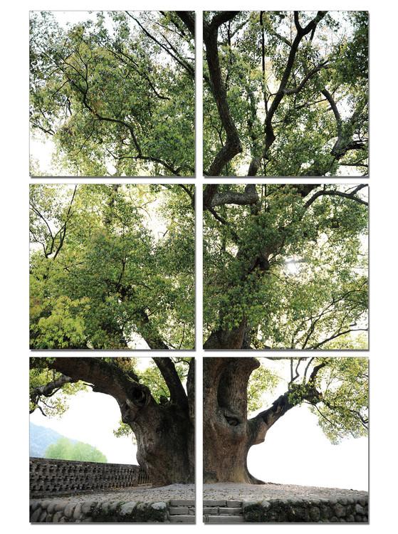 Obraz na zeď - Starý strom, (100 x 150 cm)