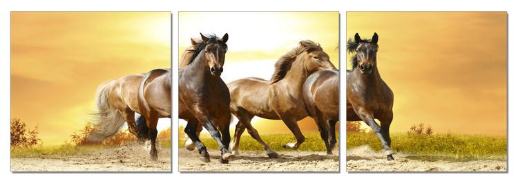 Obraz na zeď - Koně - Běžící koně pískem, (180 x 60 cm)