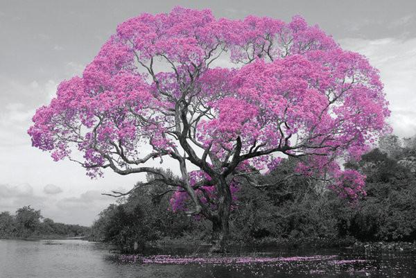Plakát, Obraz - Strom - Pink Blossom, (91,5 x 61 cm)