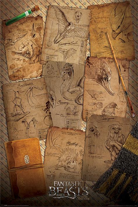 Plakát, Obraz - Fantastická zvířata a kde je najít - Notebook Pages, (61 x 91,5 cm)