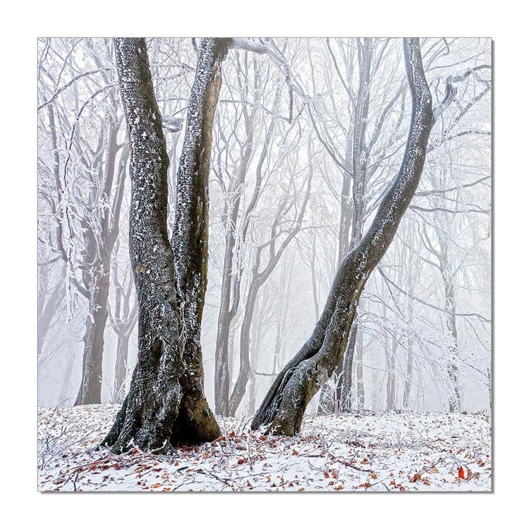 Obraz na zeď - Stromy, (120 x 120 cm)