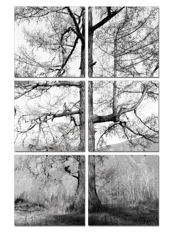 Obraz na zeď - Šedý strom, (100 x 150 cm)